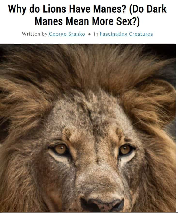 Image of article about lion manes