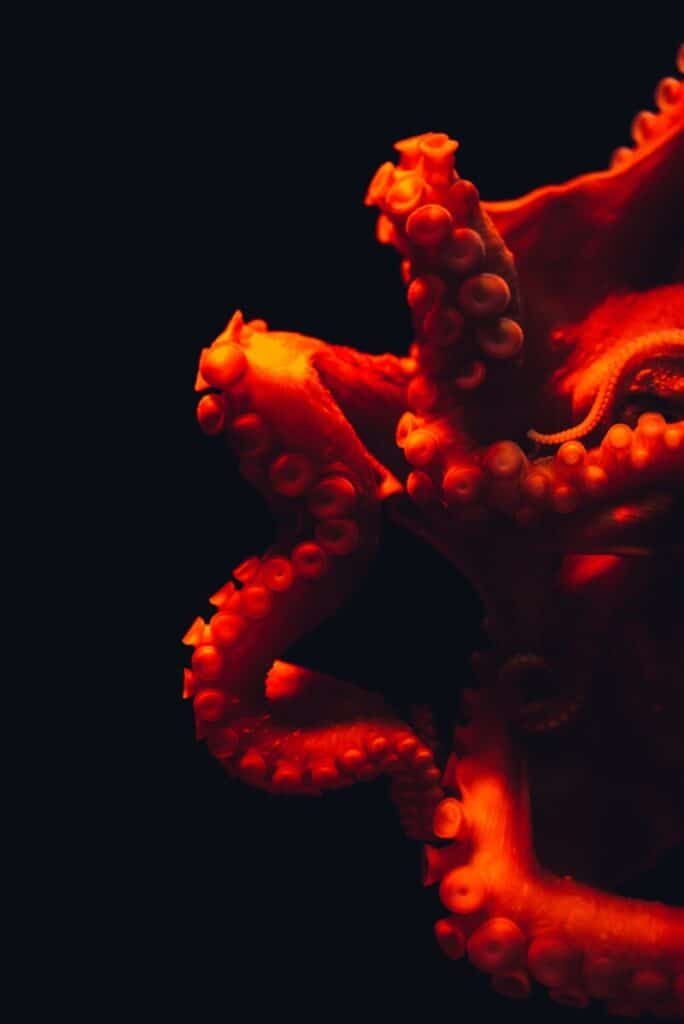 Photo of octopus arms.