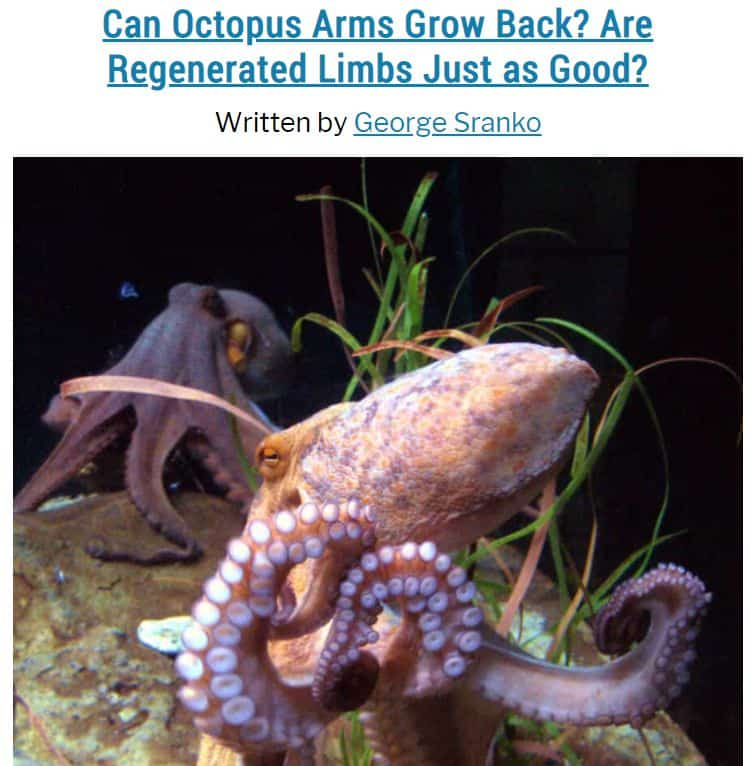 Image of post explaining how octopuses regenerate lost arms